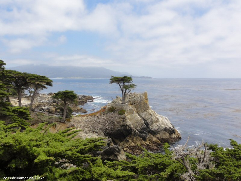 Scattered clouds and the lone cypress