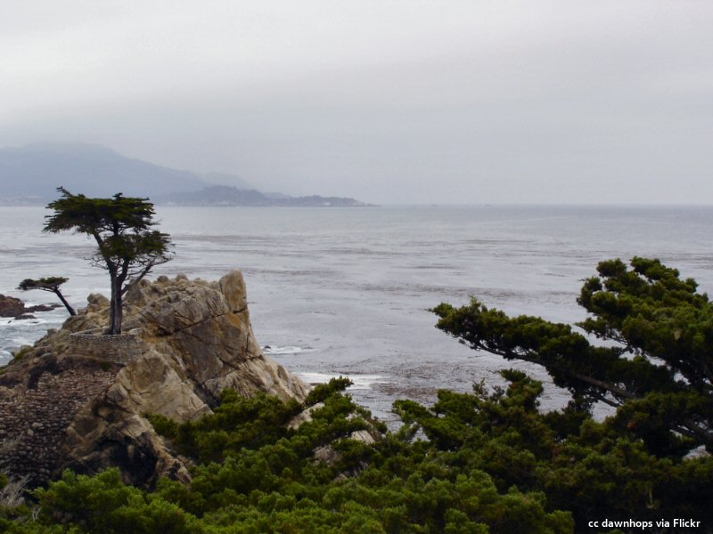 Overcast at the lone cypress