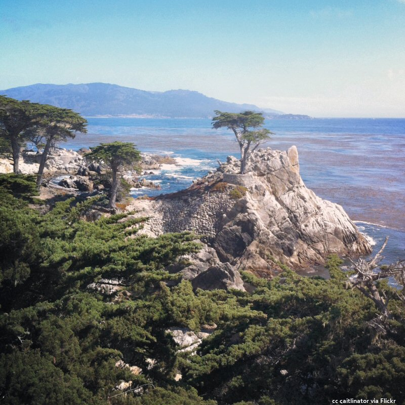 The Lone Cypress and kelp