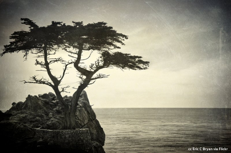 The lone cypress in black and white
