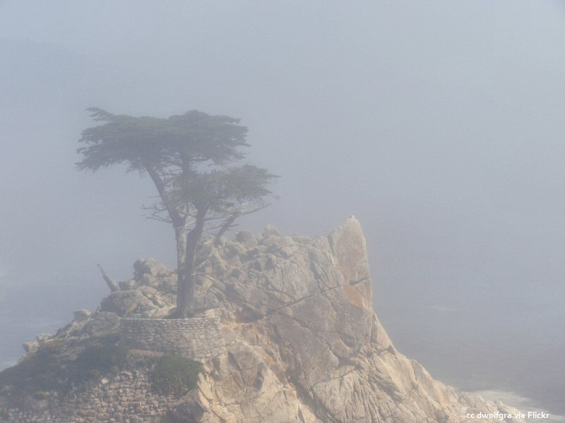 Foggy days at the lone cypress
