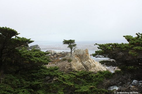 The lone cypress framed by its siblings