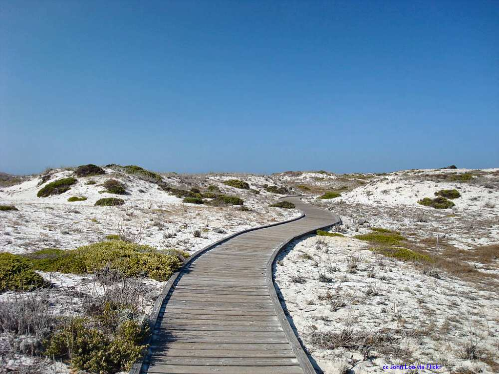 The boardwalk through the dunes at Asilomar State Beach