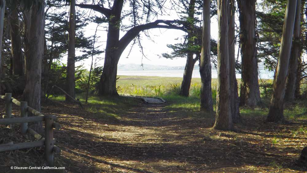 A view to Morro Bay from the Sweet Springs Preserve