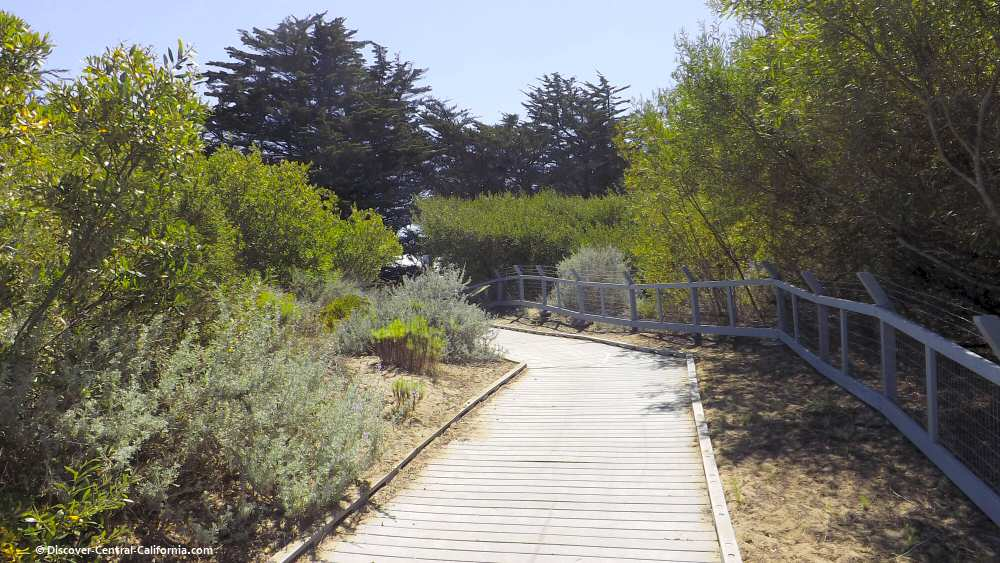 The boardwalk from Cloisters Park  leading to the beach
