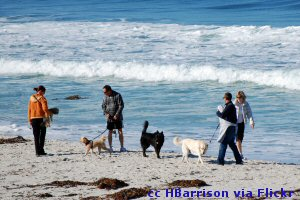 Carmel beach and dogs