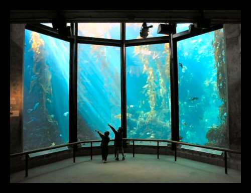 The Kelp Forest exhibit at the Monterey Bay Aquarium