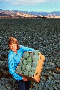 Salinas Valley broccoli