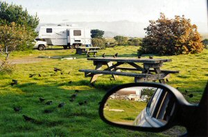 The campground at San Simeon creek