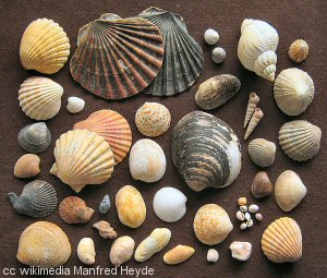 A fine collection of seashells