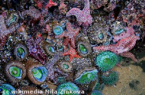 Some of the critters found in California tidepools
