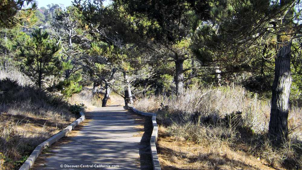 Moonstone Beach boardwalk near Santa Rosa Creek