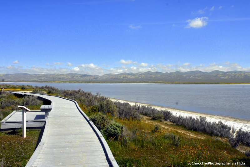 Springtime view of the boardwalk on the edge of Soda Lake, Carrizo Plains