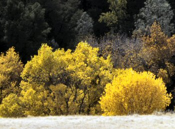 Fall foliage in Cholame Creek in Central California