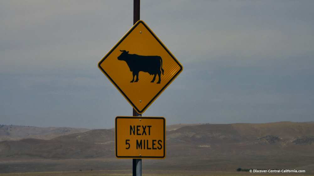 Cholame Valley Road beware of cattle on the road