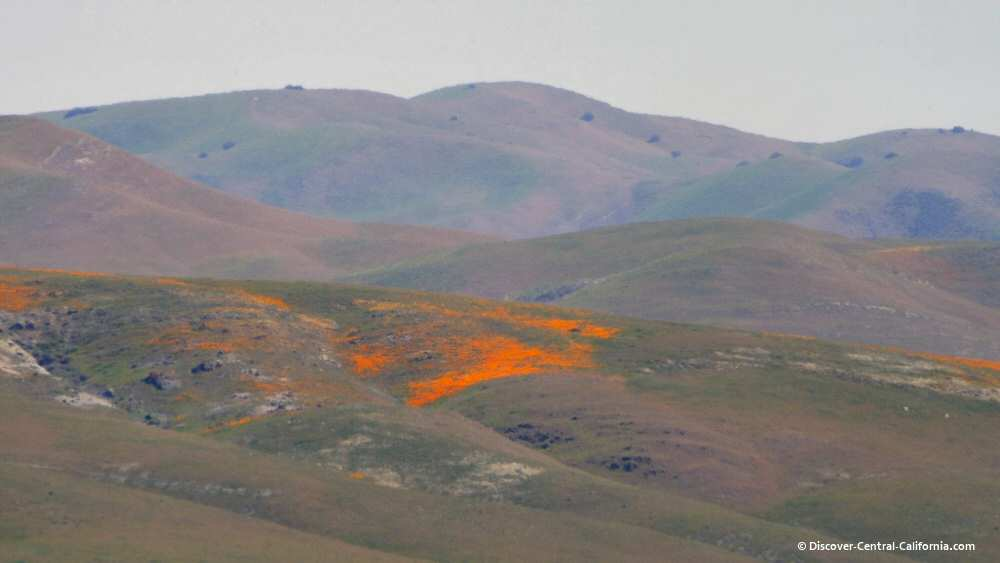 Hillsides splashed with poppies