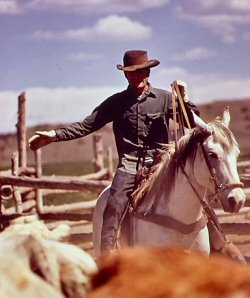 Cowboy moving cattle on horseback