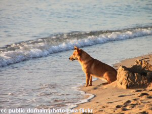Moss Landing State Beach Dog Friendly