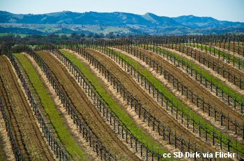 The vineyards of Eberle Winery east of Paso Robles