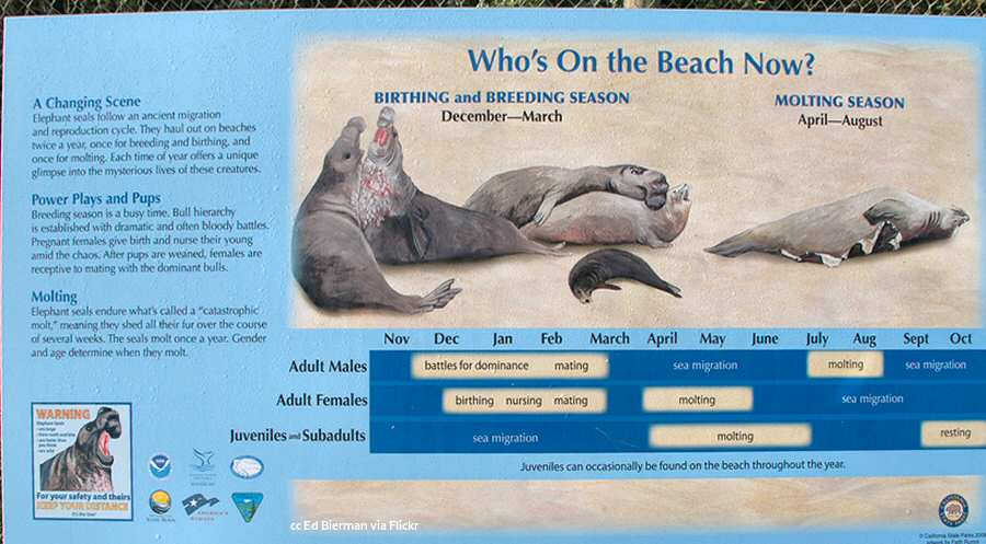 Interpretive board showing when the elephant seals are in town