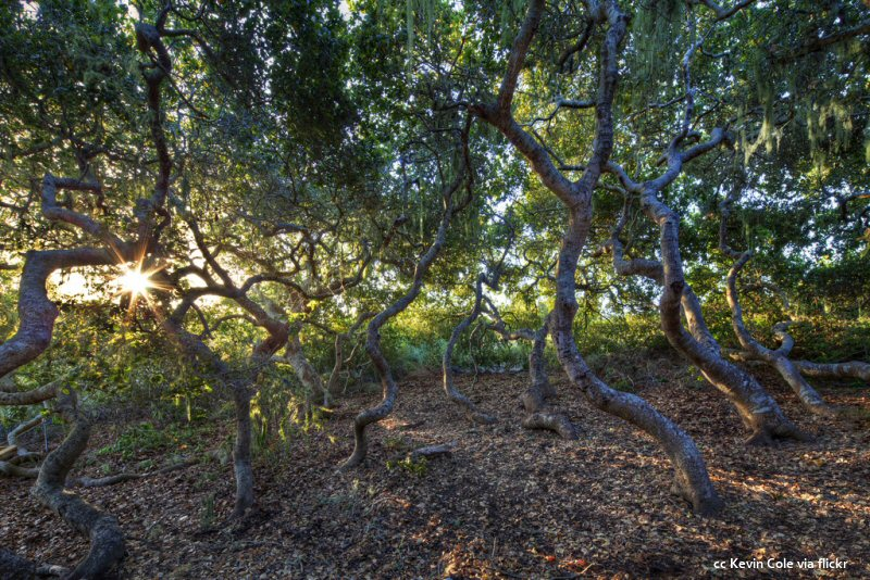 Sunrise inside a grove at the El Moro Elfin Forest