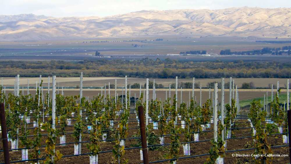 The lush agricultural area of the Salinas Valley
