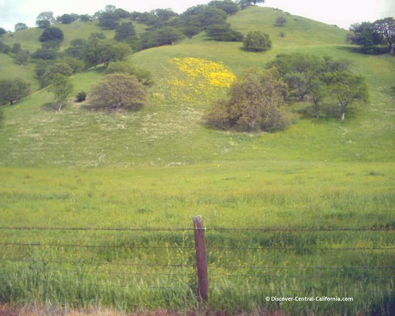 More wildflowers on hillsides