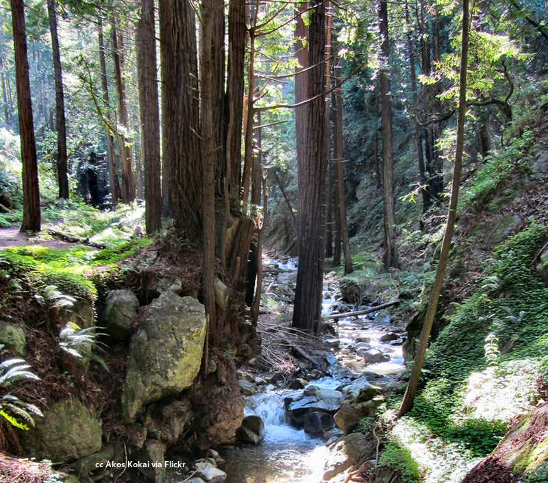 Hare Creek at Limekiln State Park