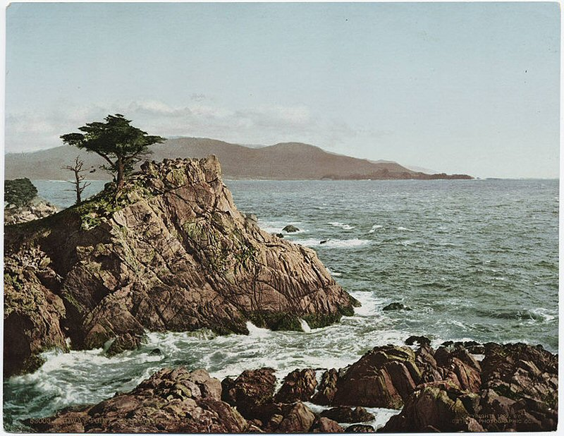 A vintage 1902 photo of the cypress with Point Lobos in the background