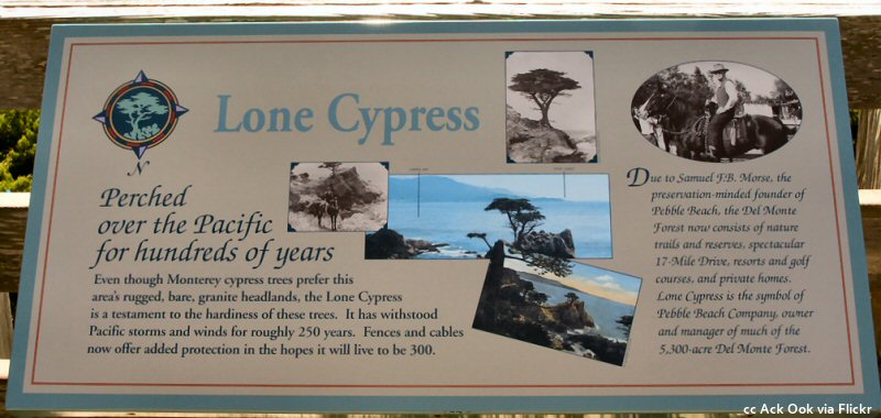 Information board at the Lone Cypress stop on the 17 mile drive