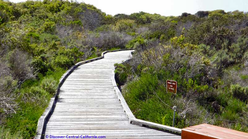 One of the numerous benches on the boardwalk through the Elfin Forest