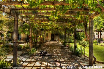 Grape arbor at the San Luis Mission