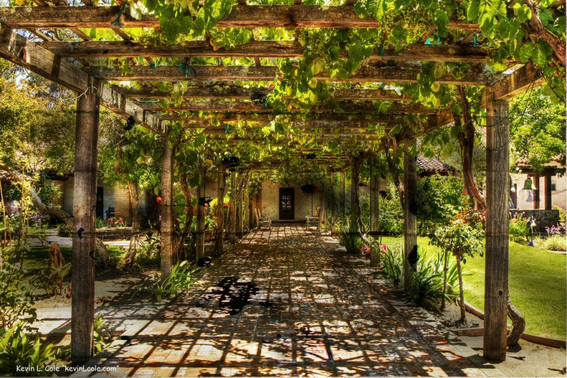 Grape arbor in the courtyard at Mission San Luis Obispo