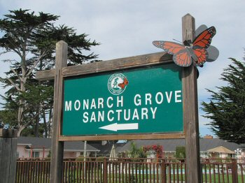 Monarch Grove sanctuary sign in Pacific Grove