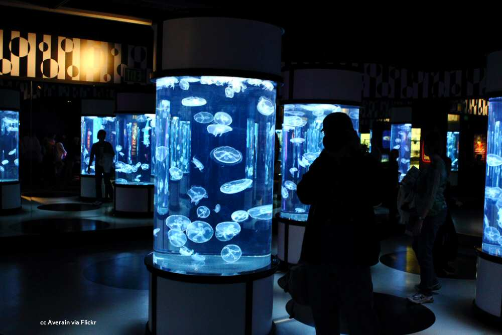 One of the many jellyfish exhibits