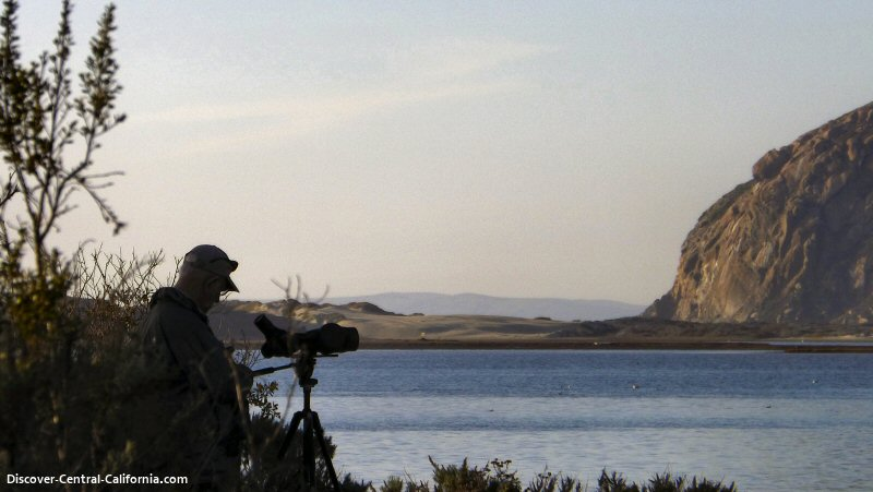 A birder on the marina boardwalk with Morro Rock in the distance