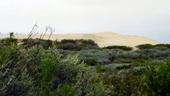 Plants and dunes at Oso Flaco Lake