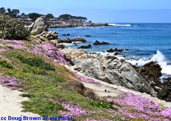 The coast walk at Pacific Grove