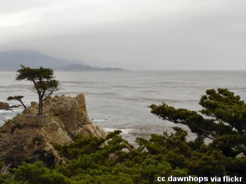 The lone cypress along Pebble Beach 17 mile drive