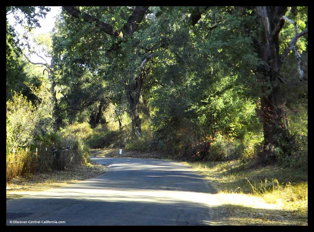 Alisal Road dappled sunshine