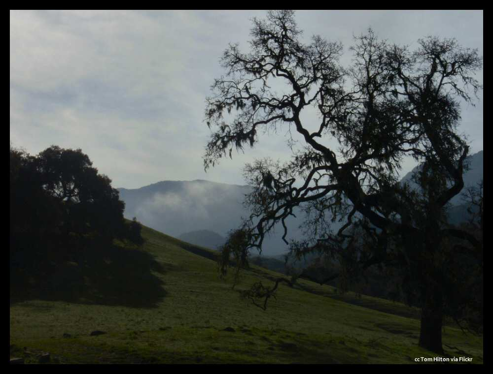 Coastal fog creeps over the Santa Ynez Mountains into the Nojoqui valley