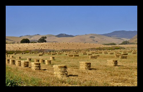 Cut and baled hay awaiting pickup in the fields of Central California