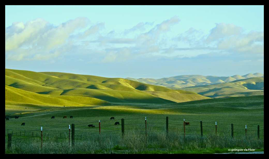 The velvet green hills along a scenic drive in Central California