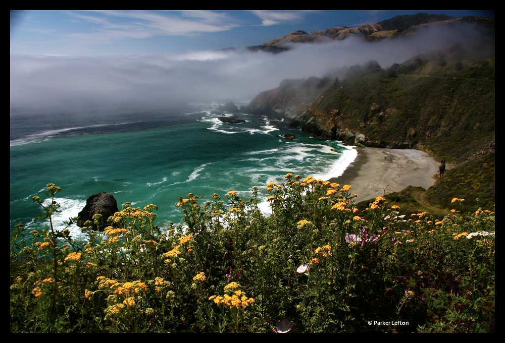 Coastal wildflowers along Big Sur