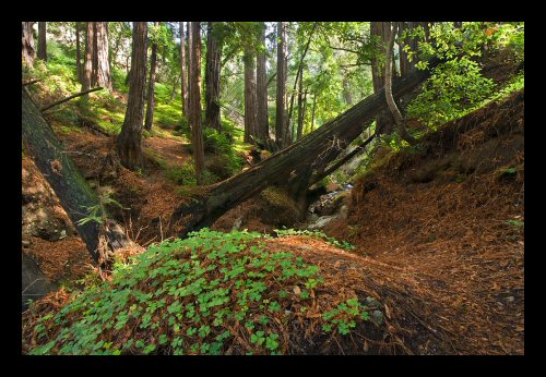 A tranquil forest scene on the Big Sur coast at Garrapata State Park