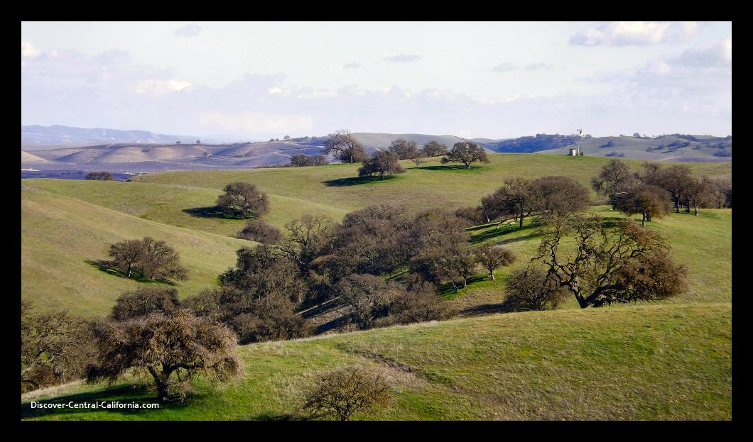 Hillside oaks east of Paso Robles