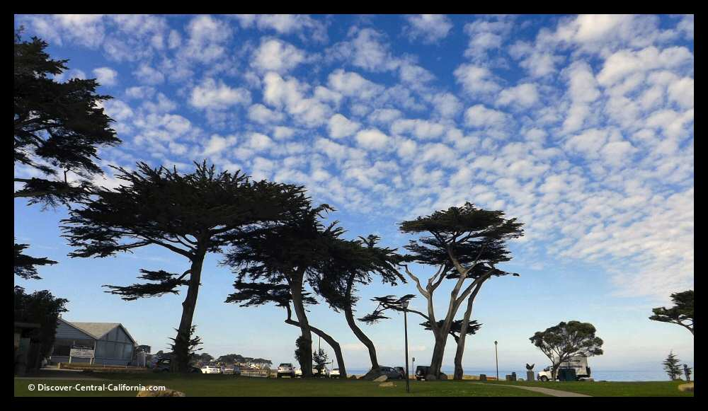 A spectacular sky is framed by trees at Lovers Point in Pacific Grove