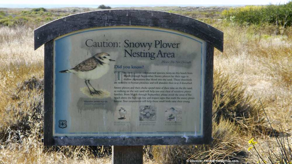 Snowy Plover sign