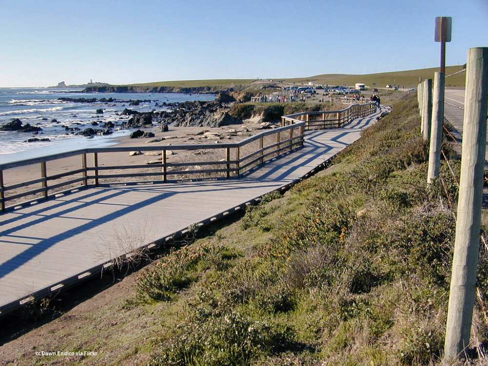 Boardwalk allowing good views of elephant seals
