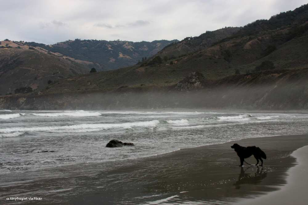 Dog and morning fog at Sand Dollar Beach